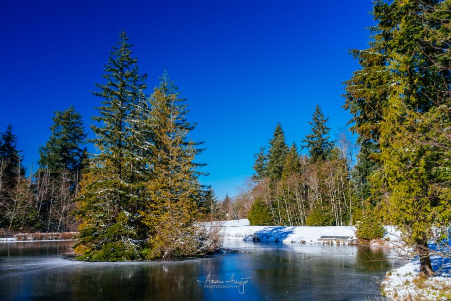 Frozen Fluke Pond