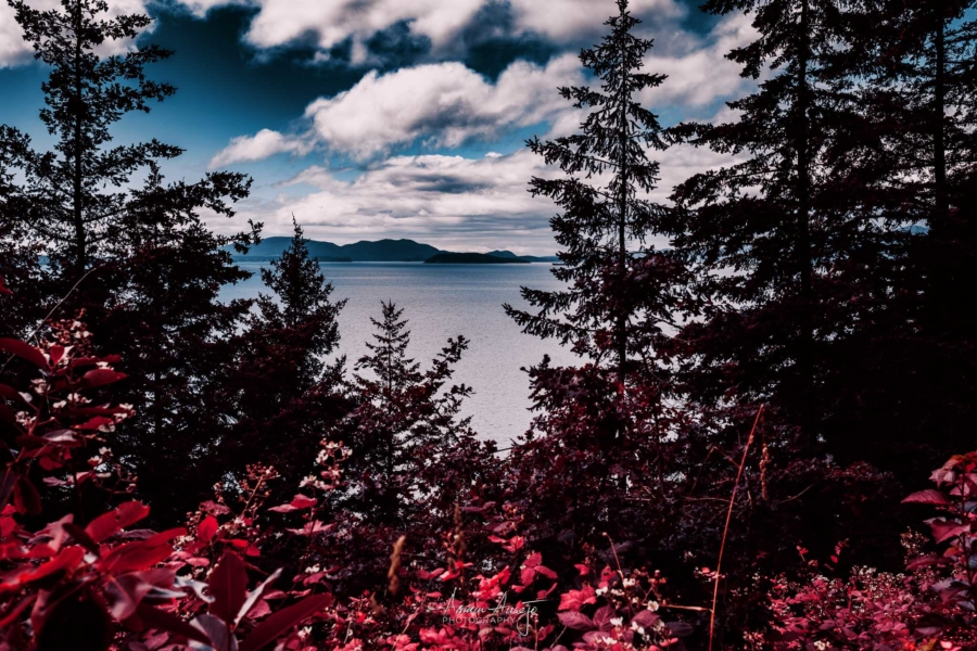 The view from Chuckanut Drive, June 2020